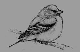 5 steps bird drawing u2013 drawing motmot