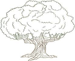 colorful pictures of trees to color free printable tree coloring