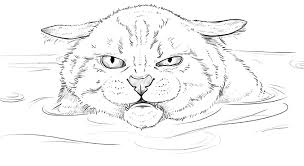 how to draw angry cat in the water youtube
