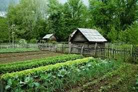 organic gardening is highly rewarding growing veggies