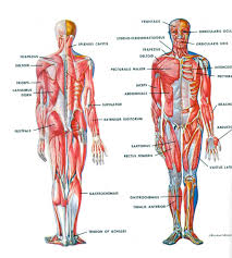Picture Of Human Anatomy Body Human Body Parts Pictures With Names Human Body Parts Name With