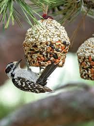 cupcake bird seed ornaments songbird tweets gardeners