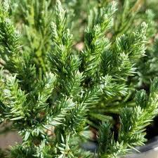 ground cover plants garden plants flowers the home depot