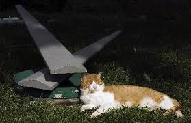 How To Keep Cats Out Of Your Backyard How To Keep Stray Cats From Spraying A Yard Pets