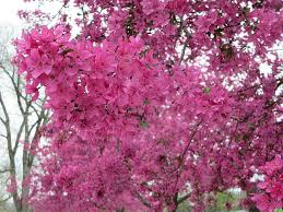 the farmer s brings pretty trees and busy days
