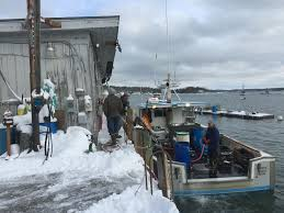 maine fishermen see warning signs in lobster surge u2013 the forecaster