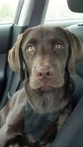 Ll Bean Dog Bed Ll Bean Has Such Cute Dogs Advertising Their Items Ko