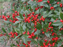 native plant nursery florida using cultivars in a native landscape knoxville botanical garden