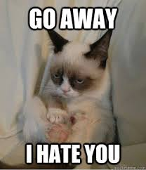 I Hate You Meme - grumpy cat sits quickmeme the best of grumpy cat pinterest