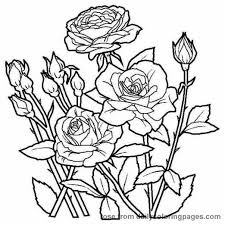 104 activities colouring flowers images