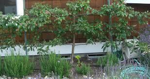 Backyard Orchard Design