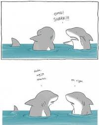 Funny Shark Meme - funny shark cartoon