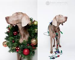 pet christmas o christmas dog minneapolis pet photographer karinnewstrom