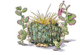 trolls succulent and cactus by stacylefevre on deviantart