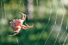 the strength of spider web glue is affected by uv light mental floss