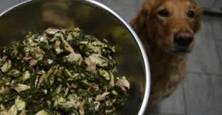 dog food reviews find the perfect fit for optimum health