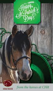 20 best horses and holidays images on pinterest horses horse