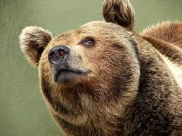 Funny Bear Memes - l oreal to help with polar bears bears brown bear and animal