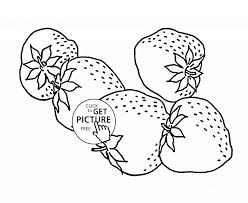 tasteful strawberry fruit coloring page for kids fruits coloring