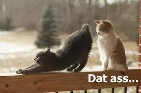 Dat Ass Cat Meme - dat ass stretching cat dump a day