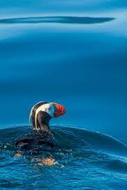spirit of halloween anchorage alaska 107 best amazing alaska animals images on pinterest animals