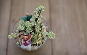 hello wonderful make a mini terrarium