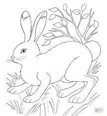 easter bunny coloring pages free printable pictures