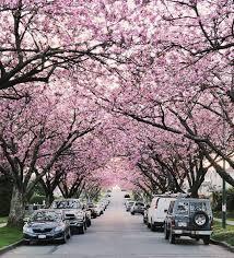 soriah kanji vancouver real estate agent vancouver cherry