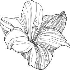 flower sketch dr odd drawings pinterest flower sketches