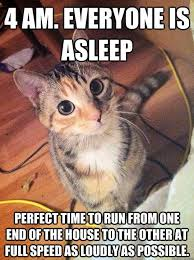 Silly Cat Memes - the best side of i love you meme picture cat prettiest cat and