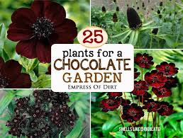 Indoor Fragrant Plants - 25 plants for a fragrant chocolate garden