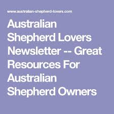australian shepherd lovers 3240 best australian shepherd images on pinterest animals