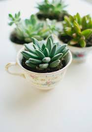 Make A Brick Succulent Planter - use antique teacups and succulents to make these fun planters