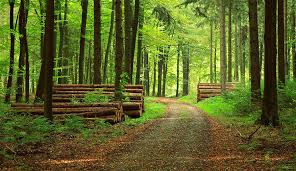 forest images Forestry agriculture and food sgs jpg