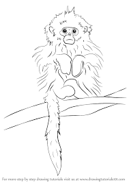 learn how to draw a tonkin snub nosed monkey primates step by