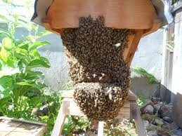 what do bees like bees first beekeeping part ii keeping backyard bees