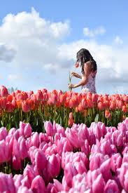 how to visit the tulip fields in amsterdam u2014 where to next