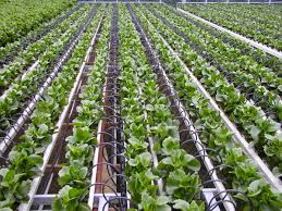 100 backyard cash crops img 0374 jpg 1600 1200 backyard