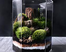 Indoor Plant For Office Desk Download Live Terrarium Solidaria Garden