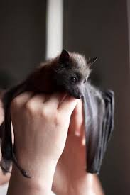 As Blind As A Bat Meaning Best 25 Worth Bats Ideas On Pinterest Clothes Pegs Diy Clothes