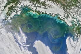 Gulf Of Alaska Map by There U0027s More Than One Way To Feed A Phytoplankton Bloom In The