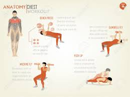 What Do Bench Presses Work Out Beautiful Design Infographic Of Chest Workout Consist Of Bench