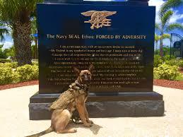 belgian shepherd navy seals raven navy seal museum multipurpose canine national navy udt