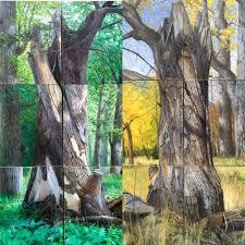 a year with a tree by david pettibone kickstarter