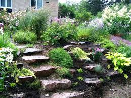 giardini rocciosi in ombra giardini rocciosi giardino roccioso di piante grasse ruby portal