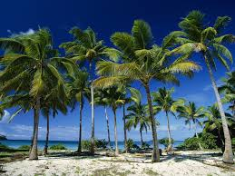 planting palm trees to help improve coastal economy in pakistan