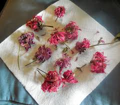 Flowers Bread Store - backyard patch herbal blog bee balm new recipes herb of the week