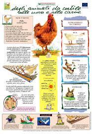 animali da cortile definizione tenuta le chiuse di reopasto fattoria didattica