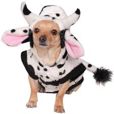 animal costumes for dogs costume craze