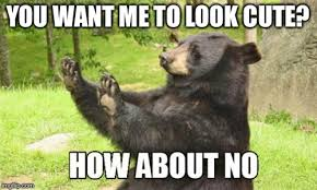 Cute No Meme - how about no bear meme imgflip